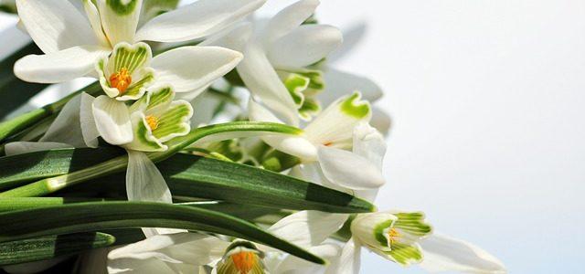 Czymże jest miłość -jest jak wiosna…rozkwita dojrzewa