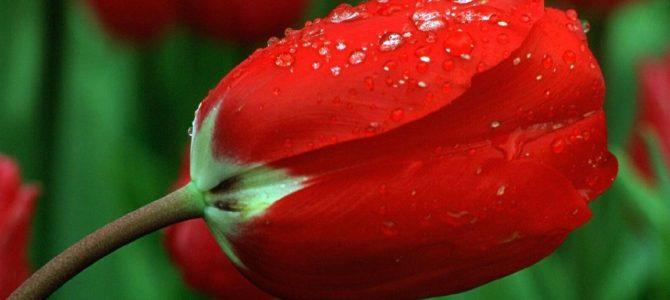 Życie  jest darem który roskwita jak kwiat  w naszych rękach..