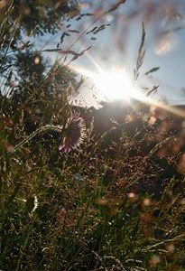 Czym promień słońca dla ziemi – tym promień nadziei dla każdego z nas