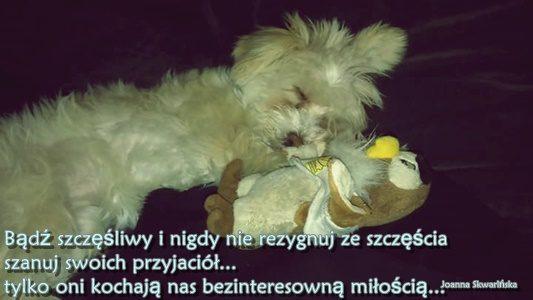 Mój pies – czworonożny przyjaciel